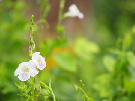 White and purple small flower on blurred of nature background 版權商用圖片 - 131363953