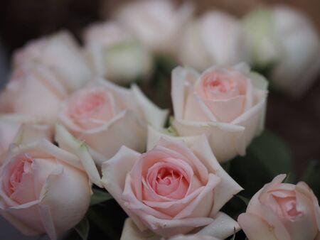 Rose pink flower beauty bouquet