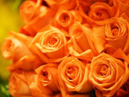 Rose Flower Old Rose color arrangement Beautiful bouquet on blurred of nature background 版權商用圖片