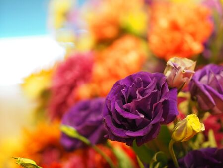 Rose Flower violet color arrangement Beautiful bouquet on blurred of nature background