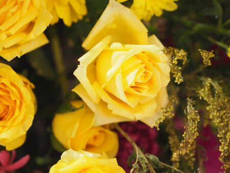 Rose Flower Yellow color arrangement Beautiful bouquet on blurred of nature background
