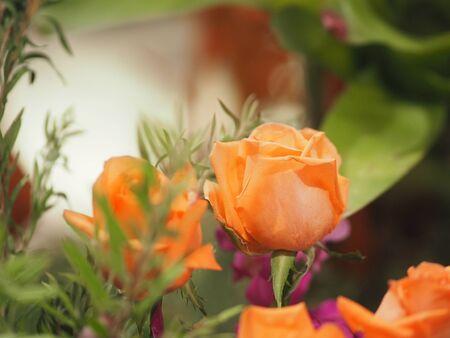 Rose Flower old rose color arrangement Beautiful bouquet on blurred of nature background symbol love
