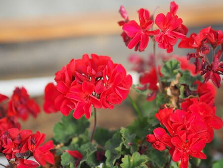 Rose Flower red color arrangement Beautiful bouquet on blurred of nature background symbol love Valentine's Day