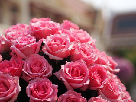 pink rose flower arrangement Beautiful bouquet on blurred of nature background symbol love Valentine Day