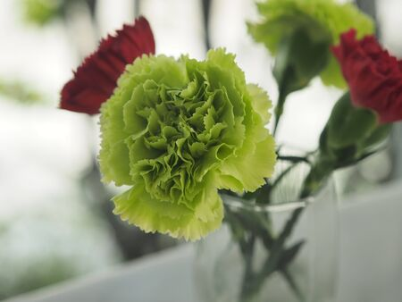 green and red Carnation Flower in water glass on the marble table