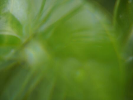 Abstract blurred of leaves nature for background Reklamní fotografie