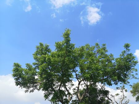 Tree on white cloud and blue sky nature background