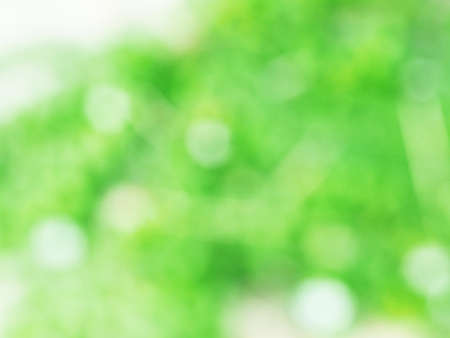 Abstract light green color bokeh beautiful blurred nature background