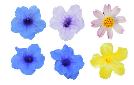 Isolate outline flower pink, yellow, purple, violet color on white background