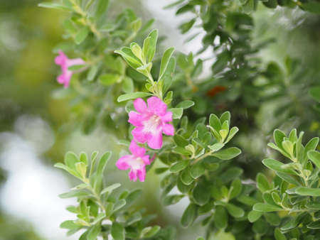 Small pink flower blooming in garden blurred of nature background