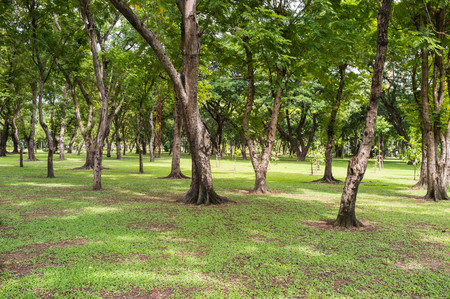 public park: vista del paisaje del parque p�blico bangkok