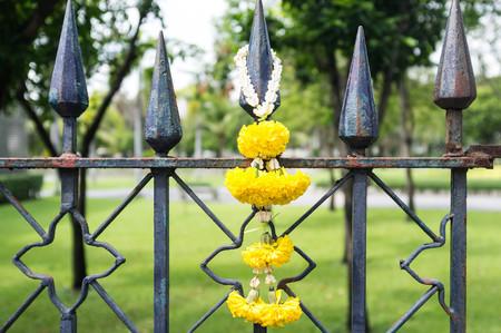 tree marigold: fresh yellow flower hang on old rusty fence