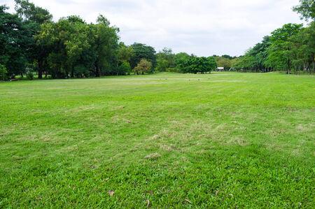 public park: campo verde plenamente con la hierba en el parque p�blico