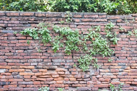 expose: expose brick wall with plant grown out of it