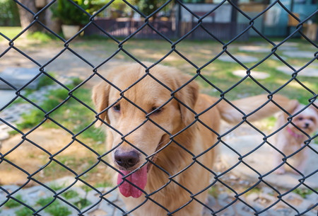 confine: cute dogs lock down in cage of dog park