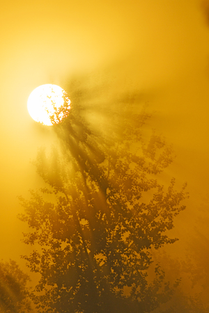 sunset lake: Tree in the sun rising in the fog Stock Photo