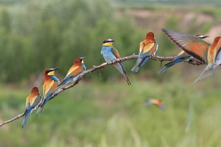 gekleurde zwerm vogels zittend op een tak op een zonnige dag Stockfoto