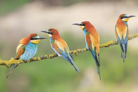 Family colored bird resting on a tree Standard-Bild