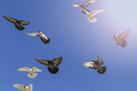 palomas volando: palomas postales que vuelan en el cielo azul, símbolo de la paz, pájaro blanco, alas Foto de archivo