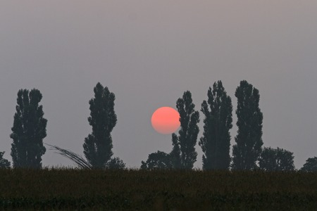 sunspot: Big red sun rising behind trees, summer morning, an unusual natural phenomenon