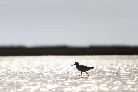 botas altas: sandpiper among beautiful bokeh in water,common redshank,art,silhouette