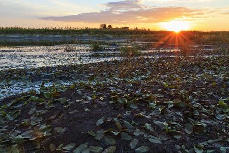 sunset on the banks of overgrown swamp,sun