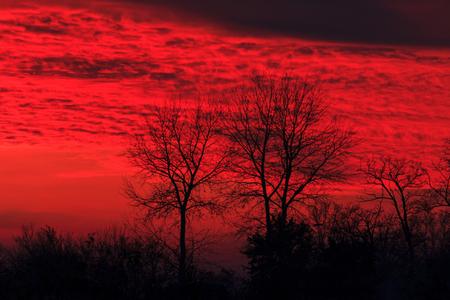 devilish sunset and black wood