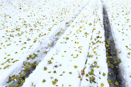 big slick: protectors of cars on snow and fallen green leaves,Car tracks, winter road