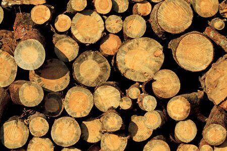 logging: pine wood piles stacked,texture, logging deforestation Stock Photo
