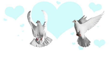pair of white doves and blue hearts on a white background,Valentines Day, love, love day, heart, symbol of love Stock Photo
