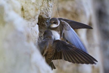 pair bird selects a birds nest,spring, migratory birds, birds, forest, lake mood