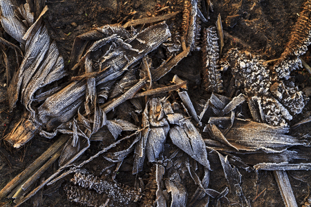 bereaved corn crop,texture, black, covered with frost, soil, dead crops fire burned grass