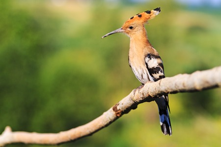 hotbed: strange bird sitting on a branch with a wistful look,exclusive bird Stock Photo
