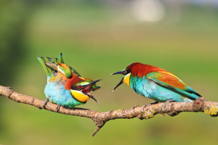 birds of paradise clarifies the relationship,natural wonders and beautiful colors