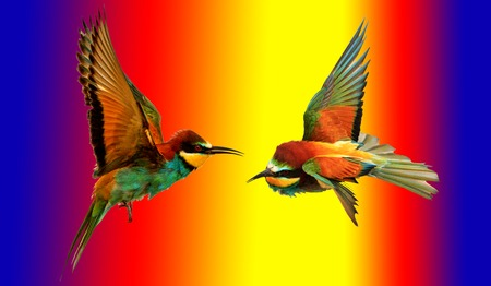 pantone colors and colored birds flying,natural wonders and beautiful colors Stock Photo