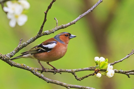colored songbird sitting on a branch of flowers Standard-Bild