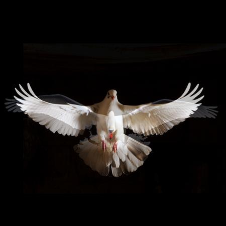 gravedad: dos pájaros blancos con alas abiertas vuelan libres de la oscuridad conceptos de libertad y liberación de algo