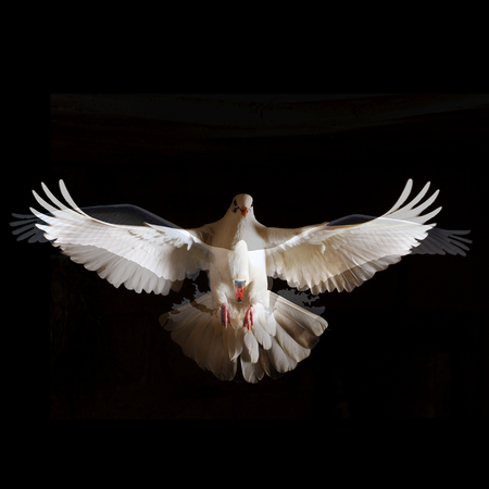 two white bird with open wings fly free from darkness concepts of freedom and liberation from something Stock Photo