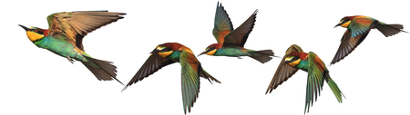 Set of exotic birds on white backgrounds,Bee-eater, creative approach Standard-Bild