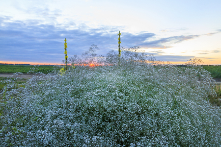 Sunset at the wild west,Medicinal plants, wildlife Stock Photo