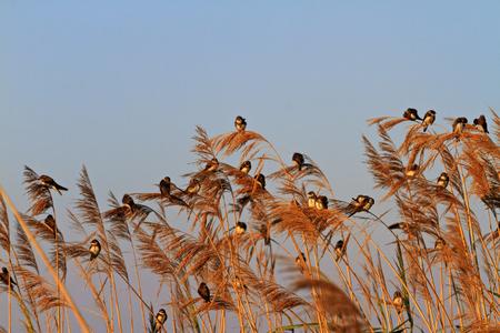 birds are illuminated by the sun in the summer morning,wildlife Stock Photo