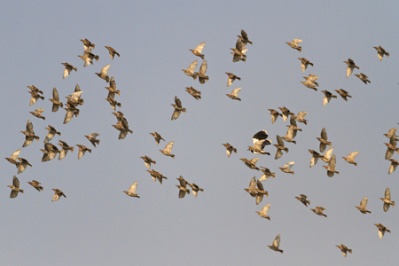 steep peak of a flock of birds