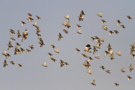 steep peak of a flock of birds
