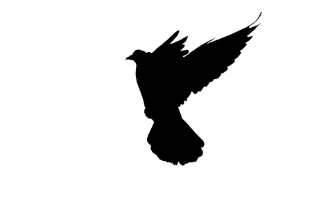 délivrance: Black silhouette of a pigeon on a white background creativity, symbols and signs