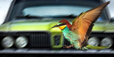 Saving birds from cars ,creativity, symbols and signs