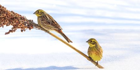 he: Birds survive in the harsh snowy winter