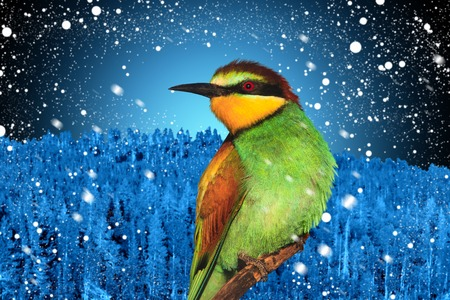 Winter holidays picture of a christmas bird against a background of winter landscape, change of year, new year 2018, christmas