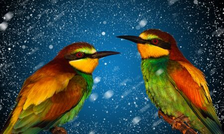 exotic birds on New Years background