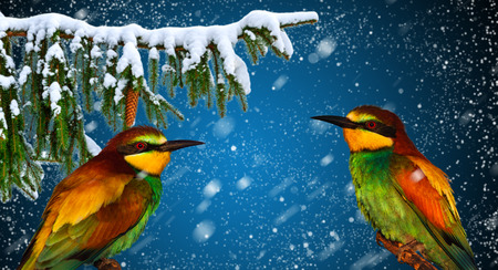 Winter holiday greeting card with two cheerful bird Stock Photo