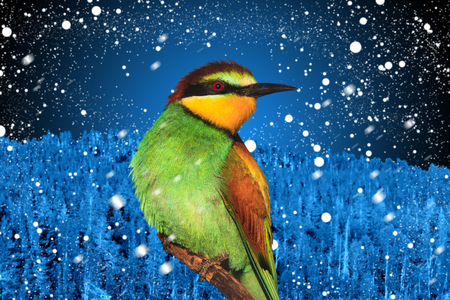 christmas bird against the backdrop of winter landscape
